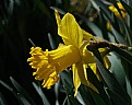 Picture Title - yellow bell