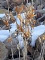 "Picture Title - ""Winter Foliage"""
