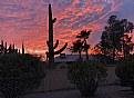Picture Title - Saguaro Sunset