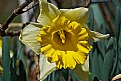 Picture Title - daffilicious