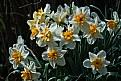 Picture Title - bouquet