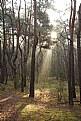 Picture Title - wschód słońca w Kampinowskim Parku Narodowym