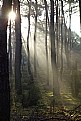 Picture Title - The sun peeks into the forest