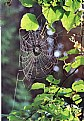 Picture Title - spider palace on a linden branch,