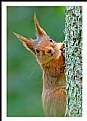 Picture Title - **The Squirrel**