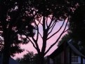 Picture Title - Sunset Sillouettes