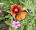 Picture Title - Butterfly morning