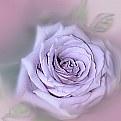 Picture Title - lavender