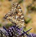 Picture Title - farfalla e fiore