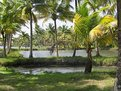 Picture Title - Coconut trees and lake bays