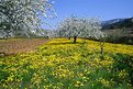 Picture Title - Spring in Provence