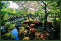 Picture Title - Japanese garden #6