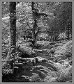 Picture Title - Hoh Rainforest