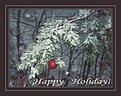 Picture Title - Holiday postcard.