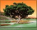 Picture Title - Pepperdine's Tree